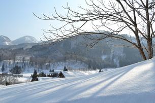 雪の里の写真素材 [FYI00464579]