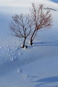 雪原の木立の素材 [FYI00464693]