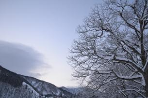雪山と大木の写真素材 [FYI00464704]