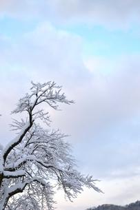 雪の朝の写真素材 [FYI00464708]