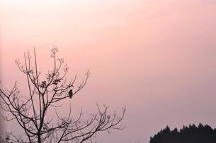 夕暮れの木立の写真素材 [FYI00464728]