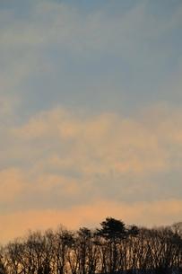 雑木林の夜明けの写真素材 [FYI00464766]