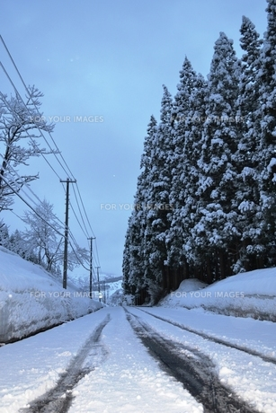 雪国の早朝の素材 [FYI00464775]