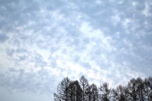 早春の朝の写真素材 [FYI00464777]