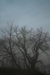 朝もやの木立の写真素材 [FYI00464787]