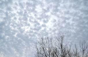 春の朝 鰯雲の写真素材 [FYI00464795]