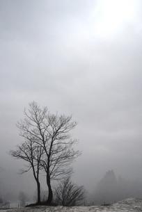 朝もやの木立の写真素材 [FYI00464801]