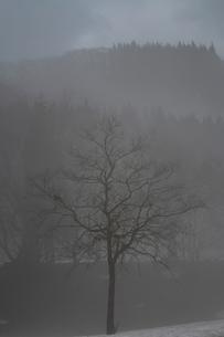 朝もやの木立の写真素材 [FYI00464811]