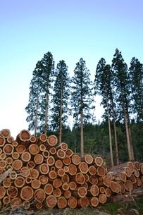 杉の伐採風景の写真素材 [FYI00464854]