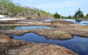 春の湿原風景の写真素材 [FYI00464902]