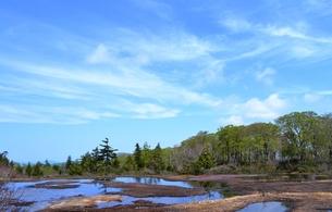 春の湿原風景の写真素材 [FYI00464916]