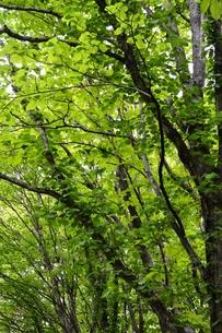 緑の森の写真素材 [FYI00464956]
