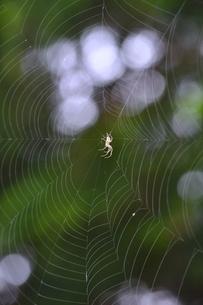 クサグモの巣の写真素材 [FYI00465036]