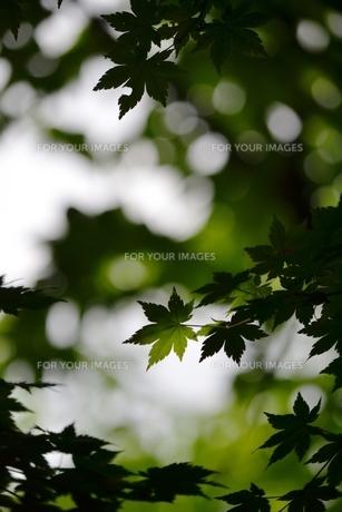 森の中からの素材 [FYI00465085]