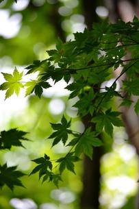 森の中からの写真素材 [FYI00465090]