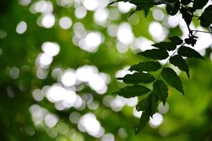 緑の森の写真素材 [FYI00465140]