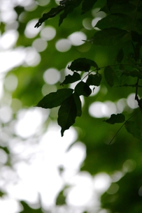 緑の森の写真素材 [FYI00465173]