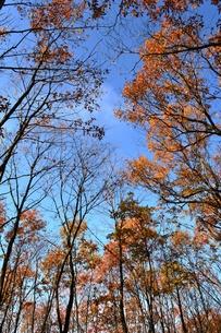 晩秋の林の写真素材 [FYI00465195]