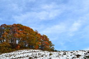 紅葉の丘と雪の写真素材 [FYI00465204]
