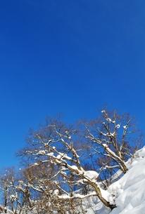 雪の斜面の写真素材 [FYI00465215]