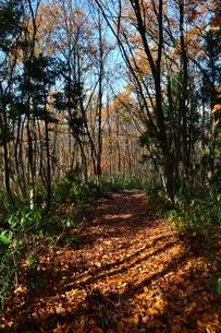 晩秋の林の写真素材 [FYI00465218]