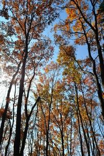 晩秋の林の写真素材 [FYI00465219]