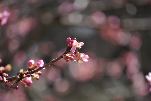 開花の写真素材 [FYI00465251]