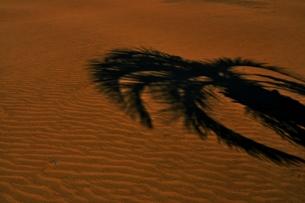 砂波に映る影の木の写真素材 [FYI00465267]