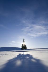 クリスマスツリーの木の素材 [FYI00465386]
