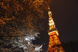 東京タワーと夜桜の写真素材 [FYI00465516]