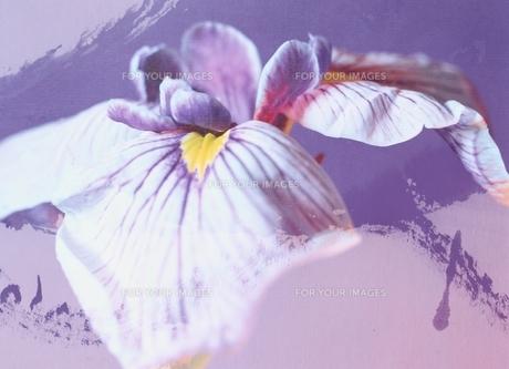 花のアップ(紫)の素材 [FYI00466044]