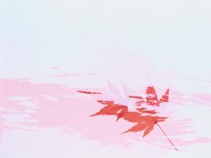 もみじとペインティングの合成の素材 [FYI00466057]