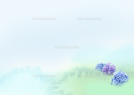 茂みに咲くアジサイの花の素材 [FYI00466145]