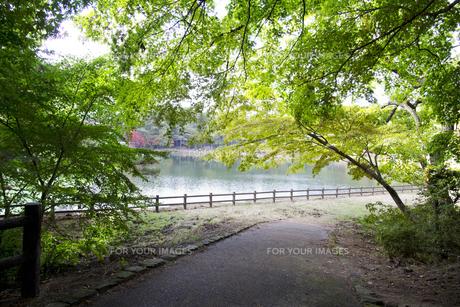 秋の紅葉の神戸再度公園の写真素材 [FYI00467226]