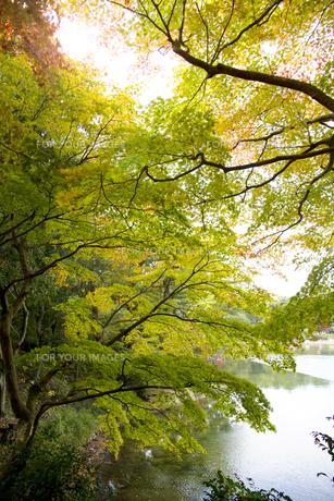 秋の紅葉の神戸再度公園の写真素材 [FYI00467233]