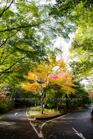 秋の紅葉の神戸再度公園の素材 [FYI00467236]