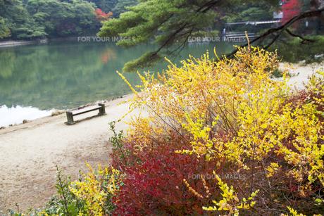 秋の紅葉の神戸再度公園の写真素材 [FYI00467237]