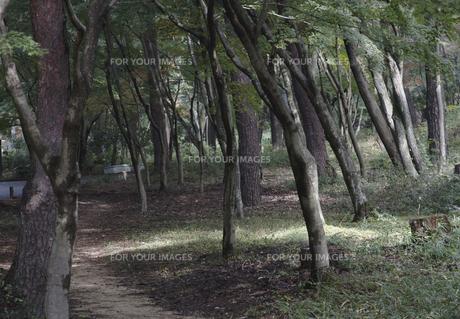 秋の紅葉の神戸再度公園の写真素材 [FYI00467242]