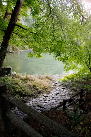 秋の紅葉の神戸再度公園の写真素材 [FYI00467244]