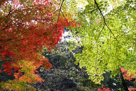 秋の紅葉の神戸再度公園の写真素材 [FYI00467245]