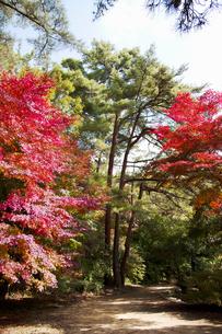 秋の紅葉の神戸再度公園の写真素材 [FYI00467246]