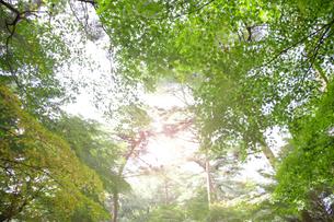 秋の紅葉の神戸再度公園の写真素材 [FYI00467248]