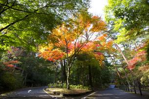 秋の紅葉の神戸再度公園の素材 [FYI00467249]