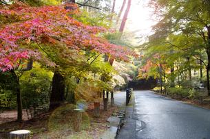 秋の紅葉の神戸再度公園の写真素材 [FYI00467252]