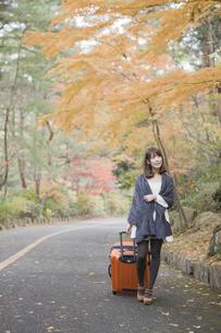 秋の紅葉した公園でトランクを引いている女性の素材 [FYI00467284]