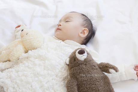 ぬいぐるみと眠る赤ちゃんの写真素材 [FYI00468173]