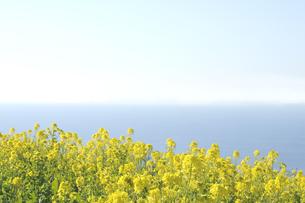 青空と菜の花と海の写真素材 [FYI00469426]