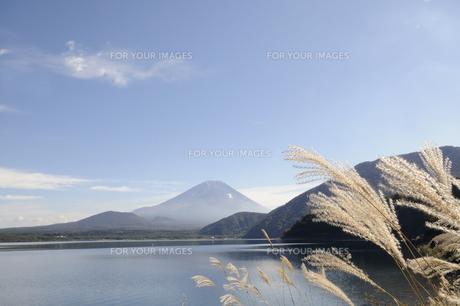 富士とススキの写真素材 [FYI00469429]