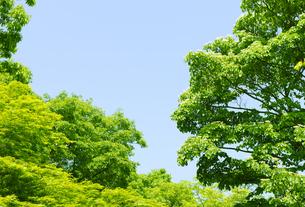 高尾山の新緑の樹木の写真素材 [FYI00469823]