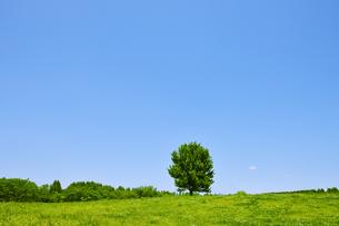 五月晴れと新緑の木立の写真素材 [FYI00469906]